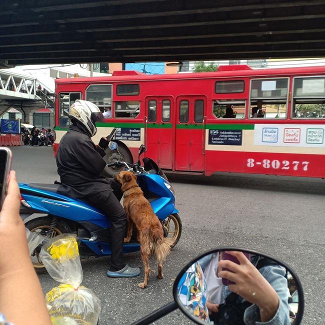 รวมข่าวน้องหมาและสัตว์เลี้ยงทั่วไทย 1 พค. 63 2